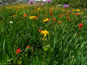 Wildflower garden closer view