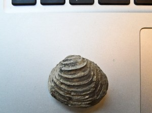 Mollusk Fossil and Computer