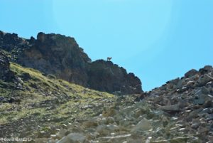 Big Horn Sheep on distant ridge, Mt. Wheeler, New Mexico